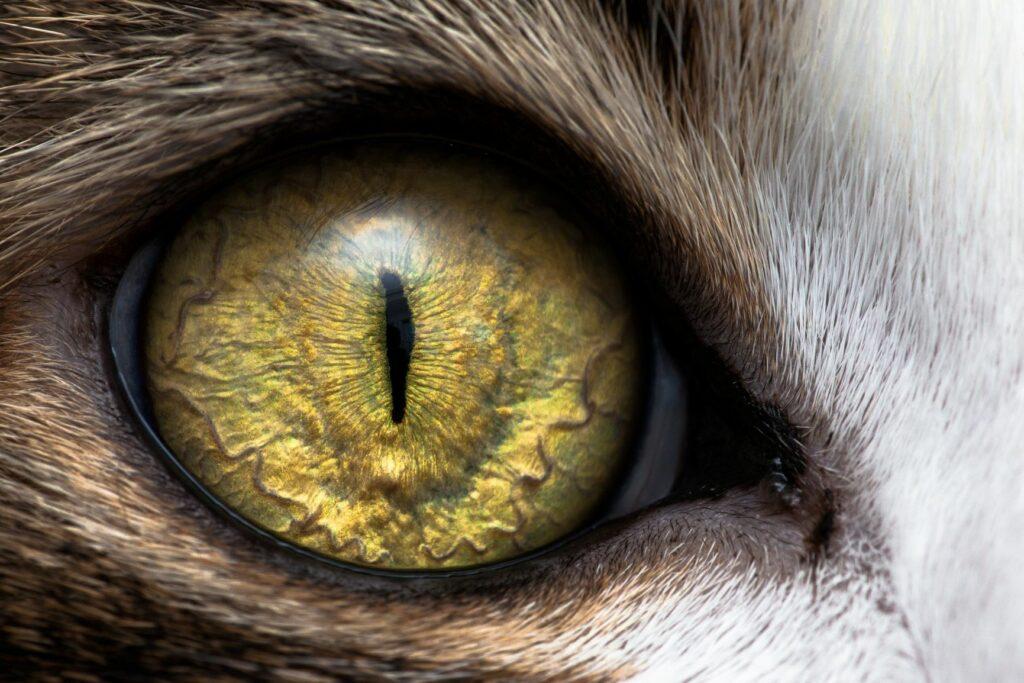 Jak vidí kočka