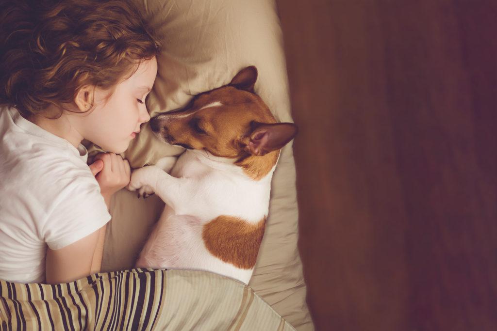 Dívka a Jack Russel teriér spí