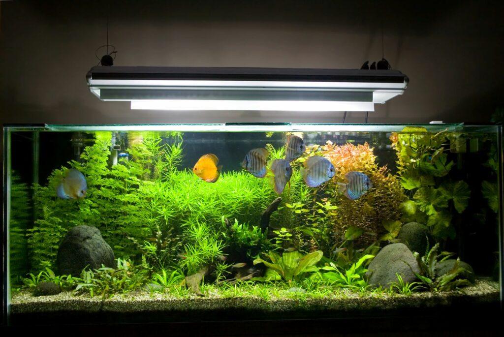 Správné osvětlení akvária