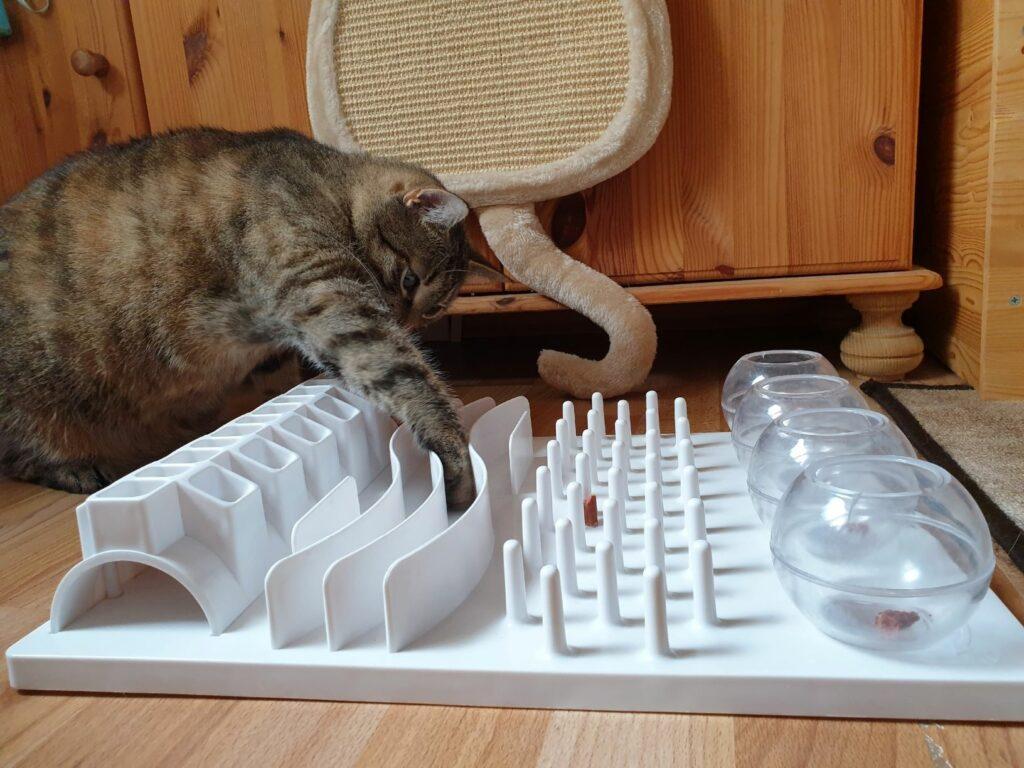 Sport pro kočky s interaktivní hračkou