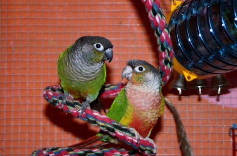 Inteligentní hračky pro papoušky