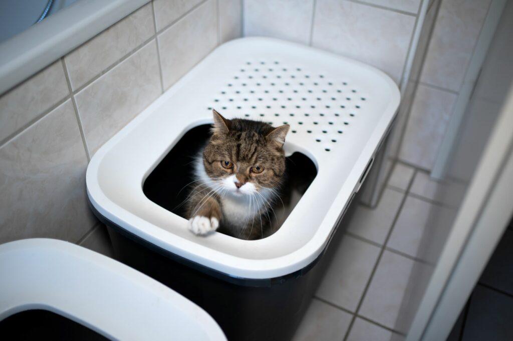 Kočka uvnitř kočičího záchodu