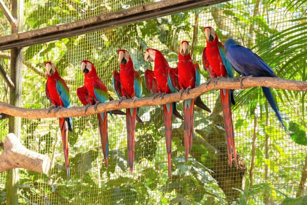 Papoušci ara ve voliéře
